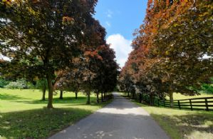 Stable Driveway - Country homes for sale and luxury real estate including horse farms and property in the Caledon and King City areas near Toronto
